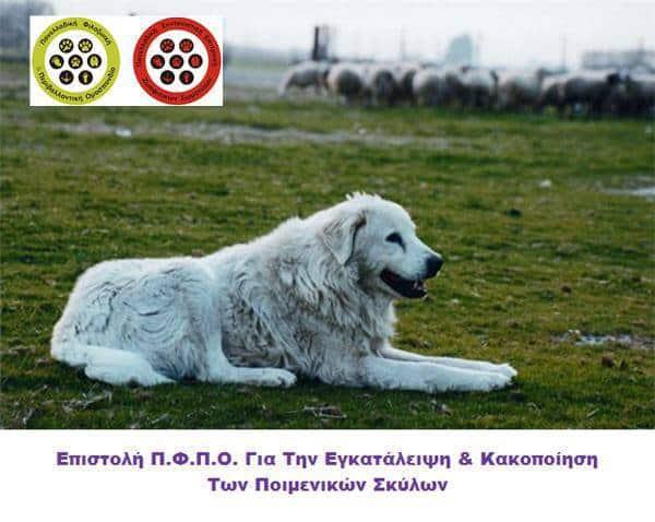 Επιστολή Π.Φ.Π.Ο. Για Την Εγκατάλειψη & Κακοποίηση Των Ποιμενικών Σκύλων