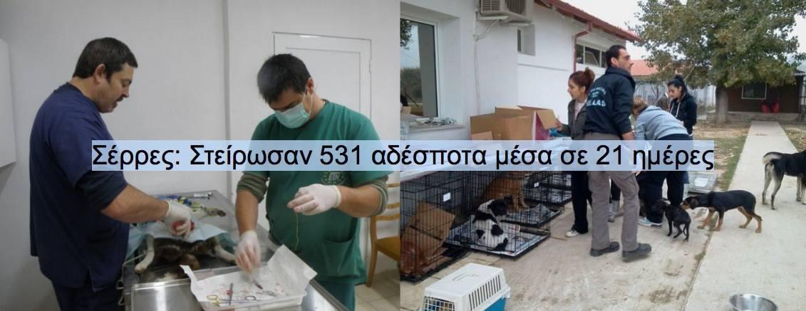 Σέρρες Στείρωσαν 531 αδέσποτα μέσα σε 21 ημέρες
