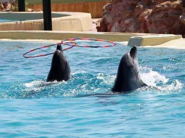 Παγκόσμια Διαμαρτυρία για τα δελφίνια – 4 θάνατοι στο Αττικό Ζωολογικό Πάρκο
