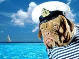 Aίτημα της ΠΦΠΟ για Άρση της απαγόρευσης λουσίματος κατοικιδίων ζώων στη θάλασσα