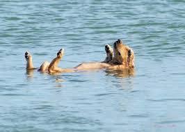 """""""Αντιαισθητική"""" χαρακτηρίστηκε η συνύπαρξη ζώων και ανθρώπων στις παραλίες από τον κ. Κοντό."""