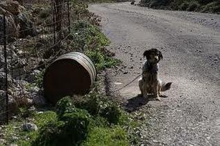 """Παγκόσμιος διασυρμός για τα βαρελόσκυλα της Κρήτης/Worldwide disparagement for the """"barreldogs"""" of Crete"""