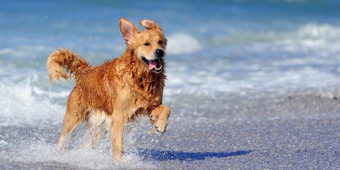 Τελικά, επιτρέπονται οι σκύλοι στις παραλίες;