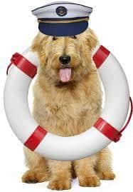 Μεταφορά κατοικίδιων ζώων με πλοία: επισημάνσεις και προτάσεις της ΠΦΠΟ.