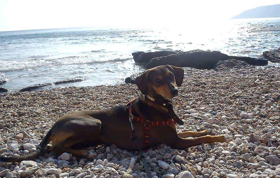 Ρεπορτάζ ΣΚΑΙ: σκύλος και παραλία συνδυάζονται; Η Μελιά μας απαντά με μια βουτιά!