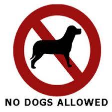 Ο Δήμος Δυτ. Μάνης απαγορεύει τα ζώα συντροφιάς στις παραλίες.