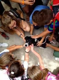 """Ξεκίνησε δυναμικά και φέτος το Πρόγραμμα Συμβιώνω με τα Ζώα Γύρω μου!/Paros and Antiparos attended the awareness program """"Living with animals around me""""."""