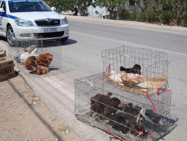 Υπαίθριο εμπόριο ζώων. Επιτρέπεται ή όχι; Ολοκληρωμένο Νομικό Βοήθημα.
