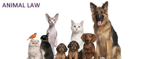 Ελληνική νομοθεσία για την προστασία ζώων συντροφιάς