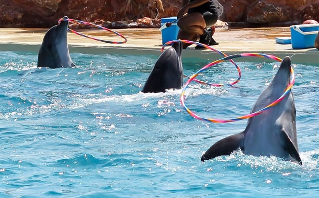 Παγκόσμια εκδήλωση κατα της σφαγής και αιχμαλωσίας κητωδών / International event against the slaughter and captivity of cetaceans