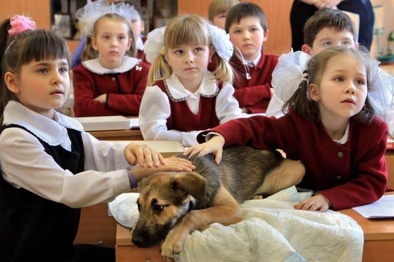 Παιδεία και θάνατος χιλιάδων ζώων είναι έννοιες ασύμβατες ηθικά / Education and death of thousands of animals are concepts morally irreconcilable