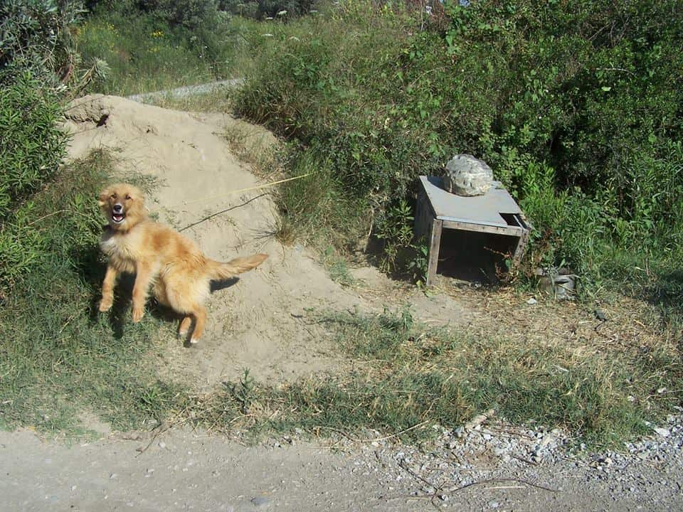 Σπαρμένο απο σκυλιά σκιάχτρα το πανέμορφο νησί της Σκύρου