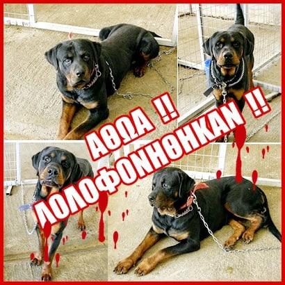 Διαμαρτυρηθείτε όλοι για την δολοφονία των rottweilers στο Δήμαρχο Κοζάνης