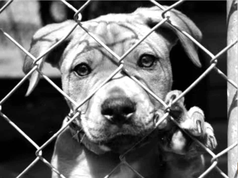 Διαστρέβλωση του νόμου για τα ζώα από τον Ιατρικό Σύλλογο Πύργου-Ολυμπίας