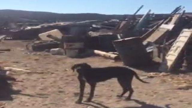 Πολλαπλές κακοποιήσεις ζώων συντροφιάς και παραγωγικών στις Κυκλάδες / Multiple abuses of pets and food-producing animals in Cyclades