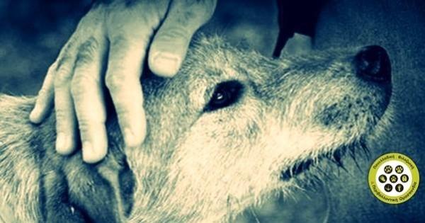 ΟΧΙ στις ευθανασίες αδέσποτων ζώων! Ψηφίζουμε