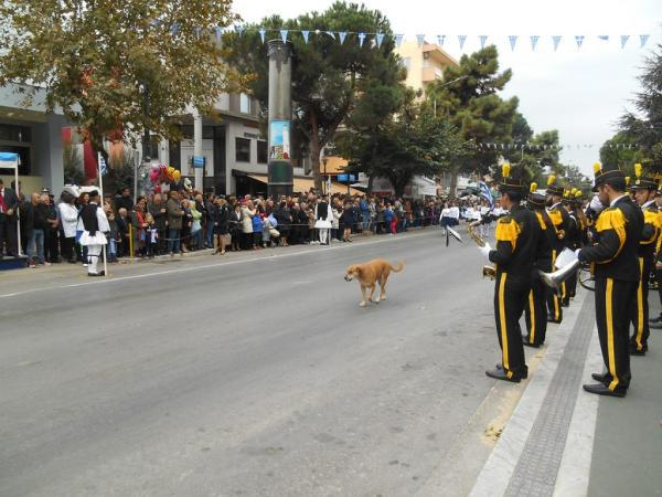 Η τετράποδη μασκότ των παρελάσεων της Αλεξανδρούπολης ξαναχτύπησε / The four-legged mascot of the parades in Alexandropolis stroke again