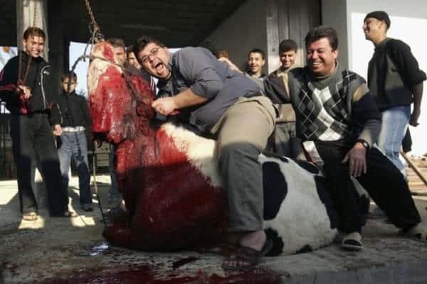 Νίκη μας έναντι του ΥΠΑΑΤ: Τέρμα στις σφαγές Κοσέρ & Χαλάλ στην Καβάλα και στην ασυδοσία και αναλγησία του ΥΠΑΑΤ / VICTORY: no to the slaughter without anesthesia and with bleeding