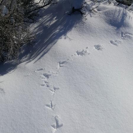 Επιτρέπεται το κυνήγι όταν χιονίζει; κείμενο της νομικής συμβούλου της ΠΦΠΟ κ. Βάσως Τάκη
