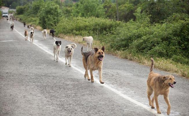 Τεράστιες οι ευθύνες του ΠΚΣ για τα αδέσποτα ζώα / Major responsibilities of the Hellenic Veterinary Association concerning stray animals