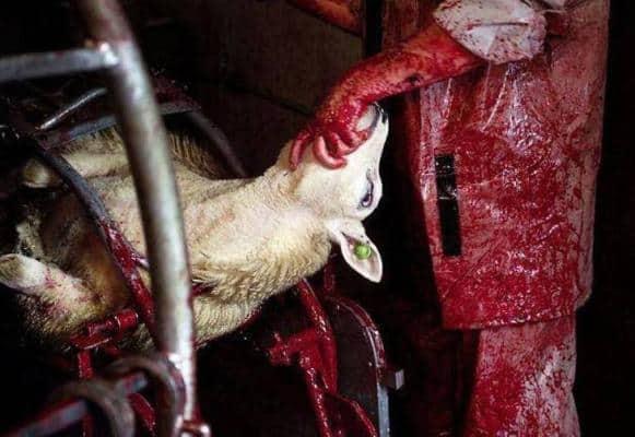 Τελετουργικές σφαγές ζώων στην Καβάλα