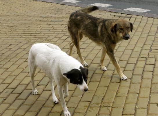Αυθαιρεσίας συνέχεια – Οι παράνομες κρίσεις και ευθανασίες αδέσποτων σκύλων στο ΔΙ.ΚΕ.Π.Α.Ζ. συνεχίζονται