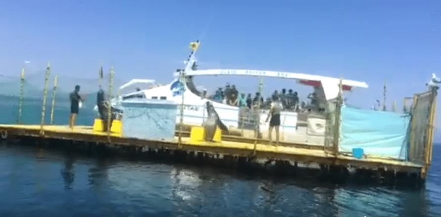 Καταγγελια της ΠΦΠΟ για παρανομο show με θαλάσσιους λέοντες στη Κερκυρα / Accusation of The PanHellenic Animal Welfare & Environmental Federation for Illegal show with Sea Lions in Corfu