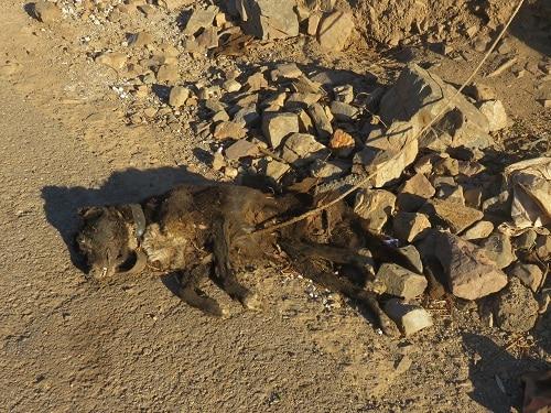 Σοκαριστικός θάνατος σκύλου απο ασιτία και καύσωνα