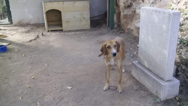 Η συγκινητική ιστορία του σκύλου στο Μουσείο Δελφών / The moving story of the dog at the Delphi Museum