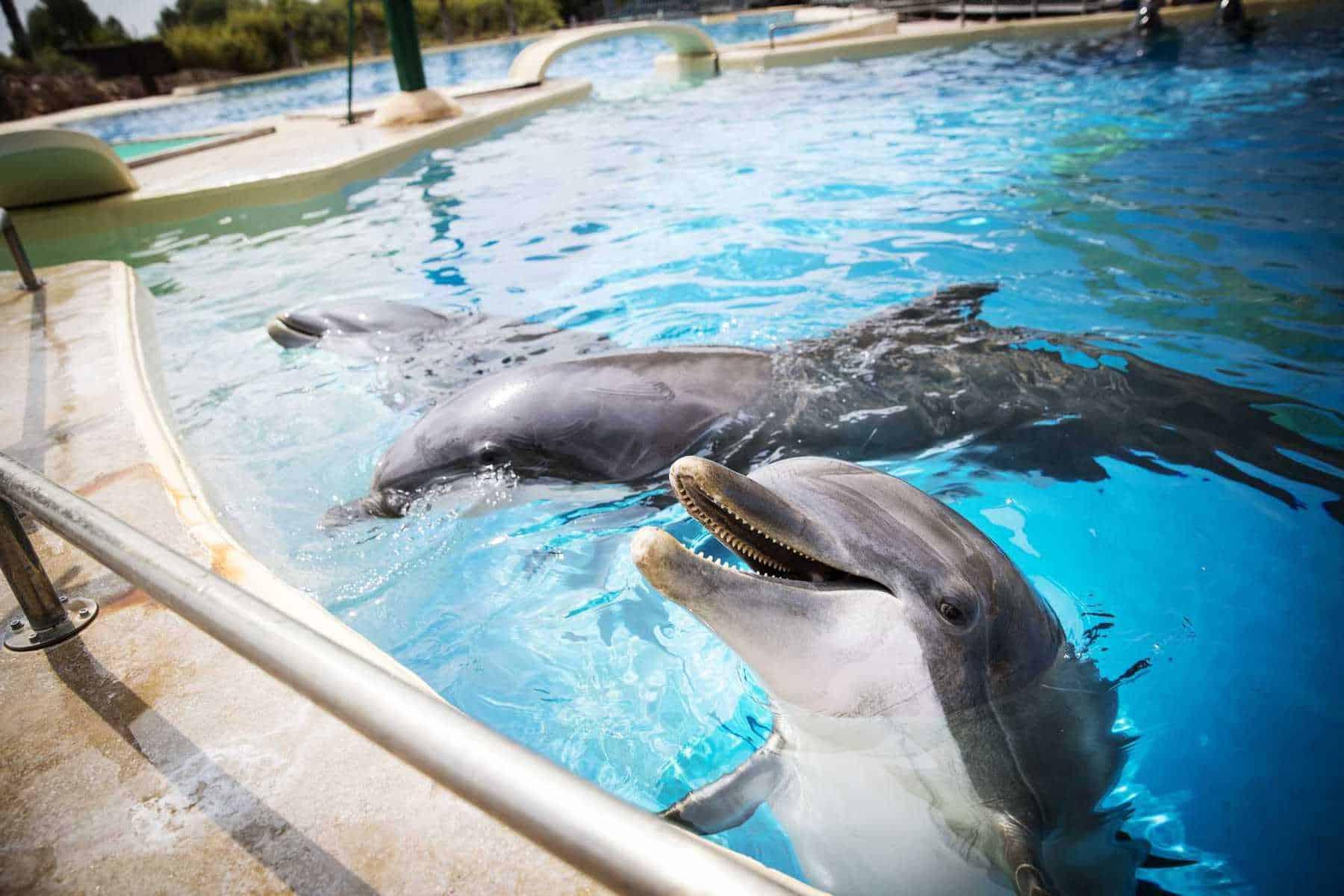 Όχι στο επιχειρούμενο έγκλημα στο Αττικό Πάρκο / One more crime against dolphins in Attika Zoo