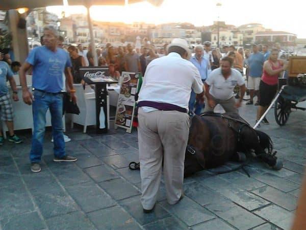 Τι έχουν τα άλογα στα Χανιά και καταρρέουν; / What is wrong with the horses in Chania that they collapse?