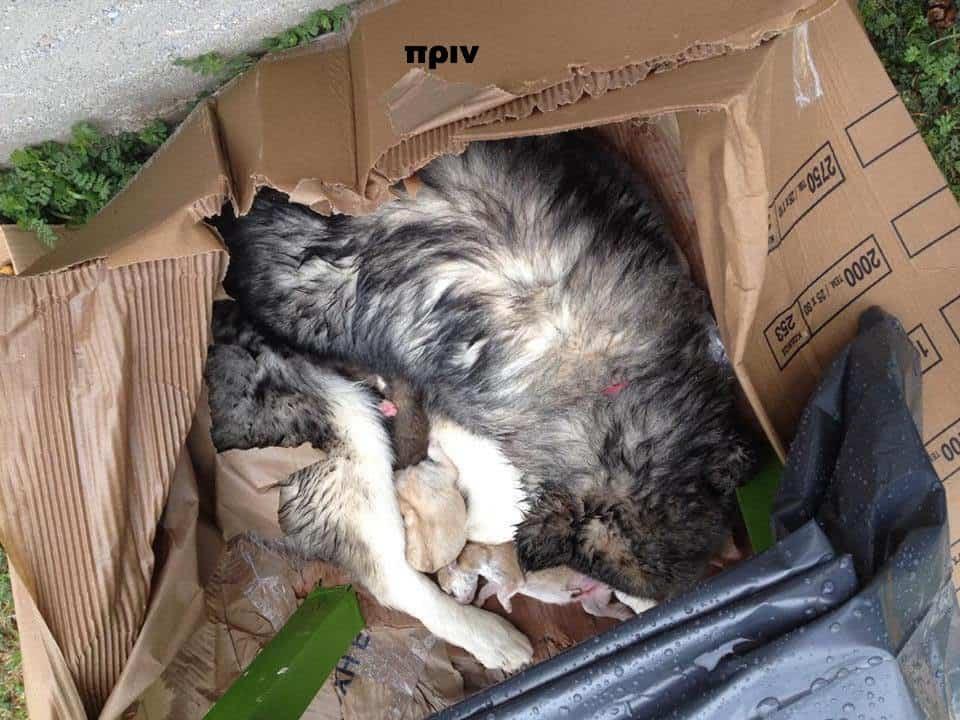 Κρίθηκαν ένοχοι για εγκατάλειψη θηλυκού σκύλου με τα νεογέννητα του! /They were found guilty for the abandonment of a female dog with her newborn puppies.