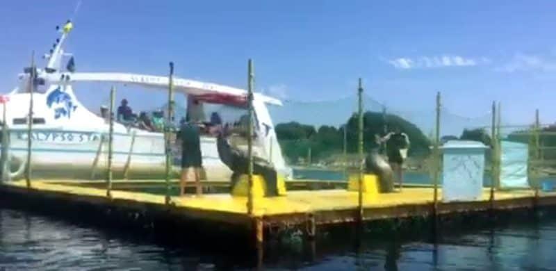 Καταδικάστηκε ο ιδιοκτήτης των θαλάσσιων λεόντων «κλόουν» στην Κέρκυρα/The owner of sea lions was finally convicted in Corfu