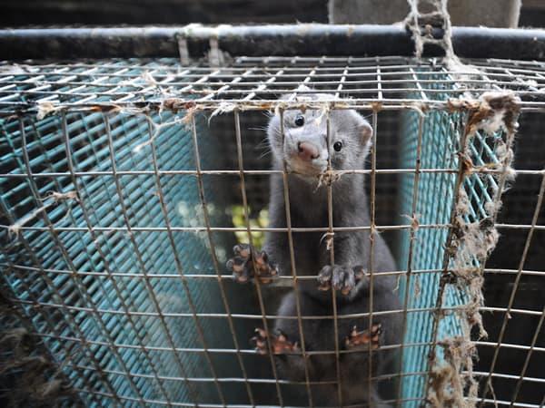 Δελτίο τύπου για την έκθεση γούνας στην Καστοριά/Press Release for the Fur exhibition in Kastoria