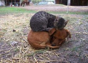 Μύθοι και (σκληρές) αλήθειες για το σχέδιο νόμου για τα αδέσποτα ζώα συντροφιάς
