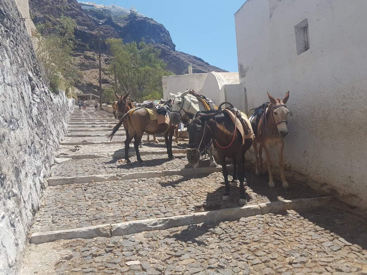 Eγκύκλιος του υπουργείου για την προστασία των ιπποειδών εργασίας