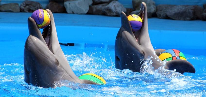 Πρόστιμο επιβλήθηκε στο Αττικό Ζωολογικό Πάρκο απο το Υπουργείο Περιβάλλοντος και Ενέργειας-Ακτιβιστές για τα δικαιώματα των ζώων διέκοψαν την παράσταση με τα δελφίνια/A fine imposed at the Attica Zoological Park by the Ministry of Environment and Energy/Animal welfare activists interrupted the dolphin show