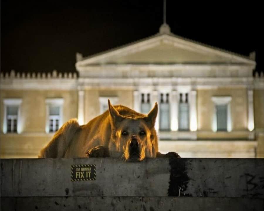 H ΠΦΠΟ στο CNN Greece για την απόρριψη προστασίας των ζώων