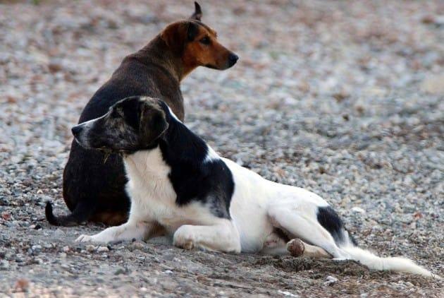 """Άρθρο της """"Εφημερίδας των Συντακτών"""" για την καταψήφιση του άρθρου 24Α για την προστασία των ζώων"""
