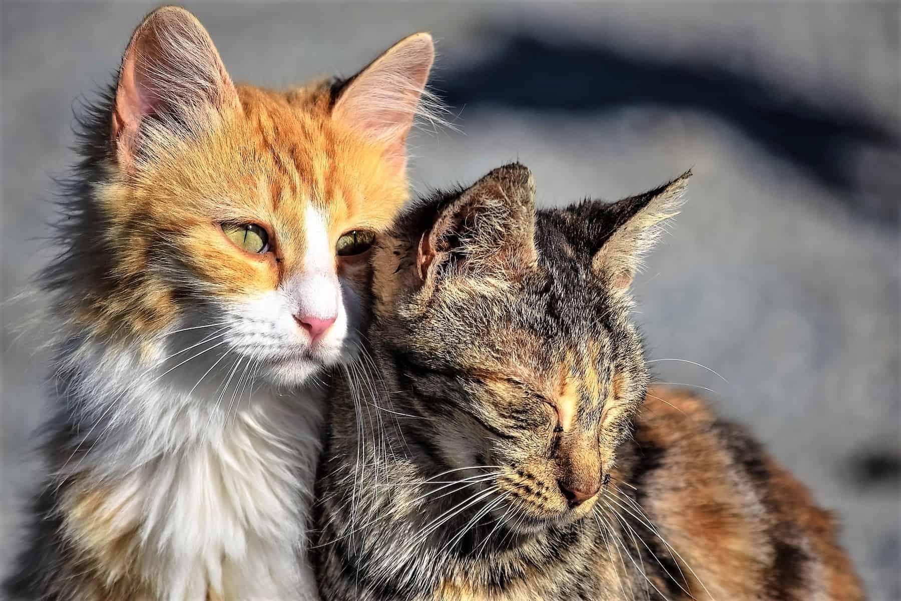 Πρόστιμο σε φιλόζωη 6000 Ευρώ γιατί τάιζε αδέσποτες γάτες / A fine of 6.000 euros was imposed to a woman for feeding stray cats
