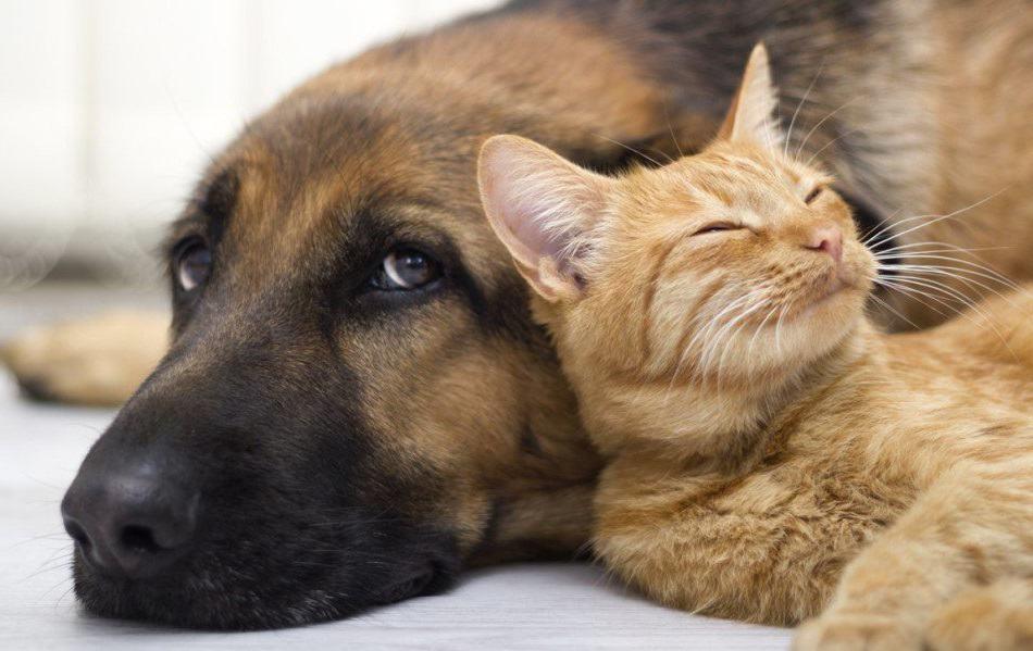 Με αφορμή μια δίκη κακοποίησης ζώων