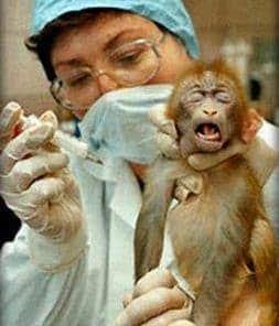 Για την εβδομάδα κατάργησης Πειραμάτων σε Ζώα / A PIECE ON WEEK DEDICATED TO BAN ON ANIMAL TESTING