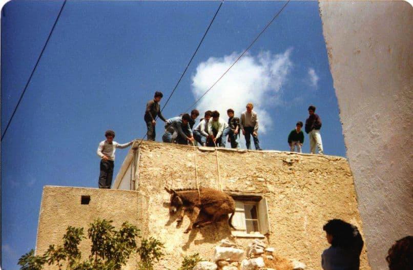 Eπιστολή της Πανελλαδικής Φιλοζωικής Περιβαλλοντικής Ομοσπονδίας για το θέμα της δημόσιας κακοποίησης ιπποειδών στην Νάξο / PFPO's letter on public equine abuse in Naxos