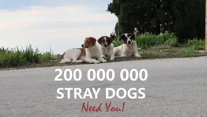 The Stray Story: A Dogumentary. Ένα ντοκιμαντέρ για τα εκατομμύρια άστεγα ζώα