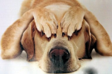 """Επιστολή για τον δάσκαλο που ζήτησε στο facebook """"συνταγή για σουβλιστό σκυλί"""" / Letter about a teacher who asked for """"a recipe for roast dog on a spit"""" on facebook!"""