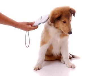 Ξεκίνησαν οι έλεγχοι από την Γενική Αστυνομική Διεύθυνση Κρήτης / Inspections of pet owners by General Police Directorate of Crete