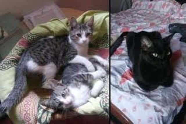 Απεγκλωβίστηκαν οι γάτες της κατάληψης Βανκούβερ / CATS RESCUED IN THE SEIZURE OF THE VANCOUVER BUILDING