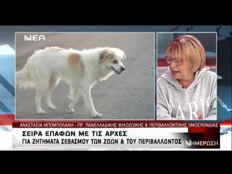 H Πρόεδρος της ΠΦΠΟ Νατάσα Μπομπολάκη στην Νέα Τηλεόραση Κρήτης, για τις επαφές με τις αρχές για τα θέματα των ζώων και του περιβάλλοντος