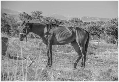H oμιλία στην Νάξο του Ελληνικού Συλλόγου Προστασίας Ιπποειδών