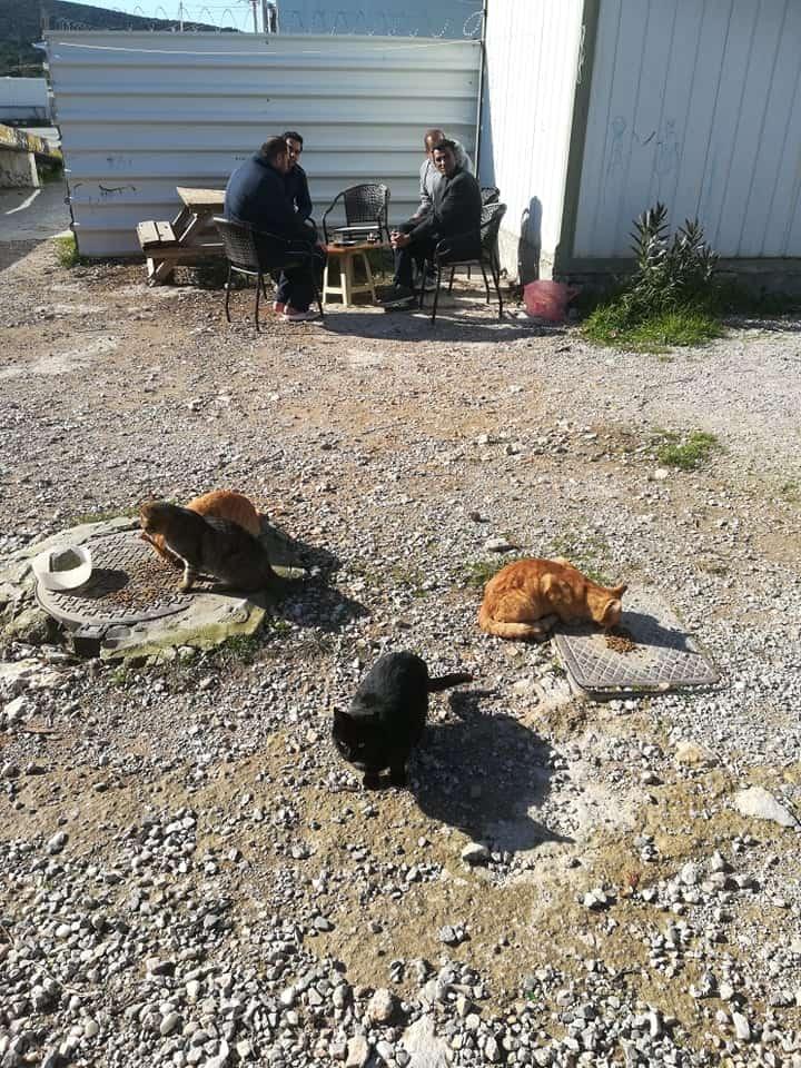 Ευχαριστούν την Royal Canin  και την Ομοσπονδία για τροφές σε αδέσποτα ζώα της δομής προσφύγων στο Σχιστό / Special thanks to Royal Canin and PFPO for food donation for strays living in the refugee camp at Sxisto